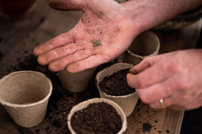 close up seeds being sown in compostable pots