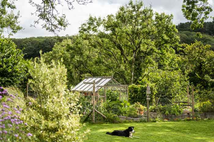Rhino greenhouse in August with lots of luscious foliage and trees. A black and white collie lies on the lawn in front.
