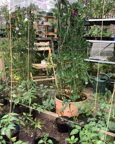 wooden folding chair inside greenhouse place to sit while gardening