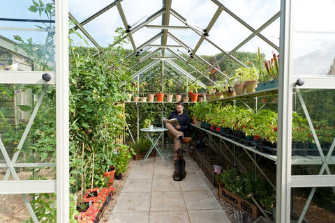 Tomato vines and chilli plants inside Rhino Greenhouse with man reading, dog, cup of tea.