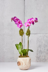 LAYER NY DELANCEY FUCHSIA ORCHIDS WITH MOSS AND TEAK BOWL