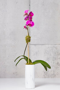 LAYER Jane 1 Fuchsia Phalaenopsis Orchids, tall White marble planter