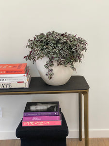 LAYER NY Inch Plant with white planter, on entryway table