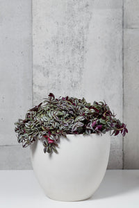 LAYER NY Chrystie L Inch Plant, White Planter