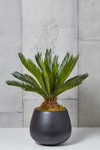 LAYER BARCLAY TROPICAL SAGO PALM, BLACK PLANTER