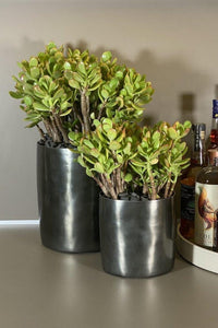LAYER NY Gansevoort Large and small Jade Succulent,