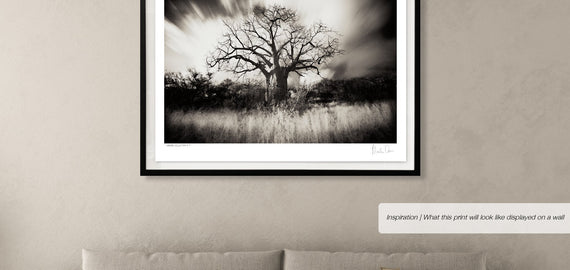Baobab Collection No.4