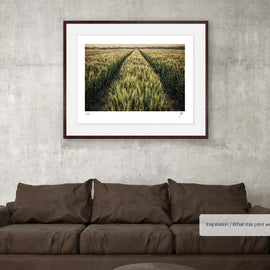 Wheatfield with Tractor Tracks