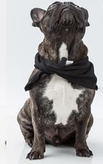 Oscar & Ethel | Lucky Black Scarf