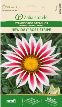 Gazānijas New Day Rose Stripe