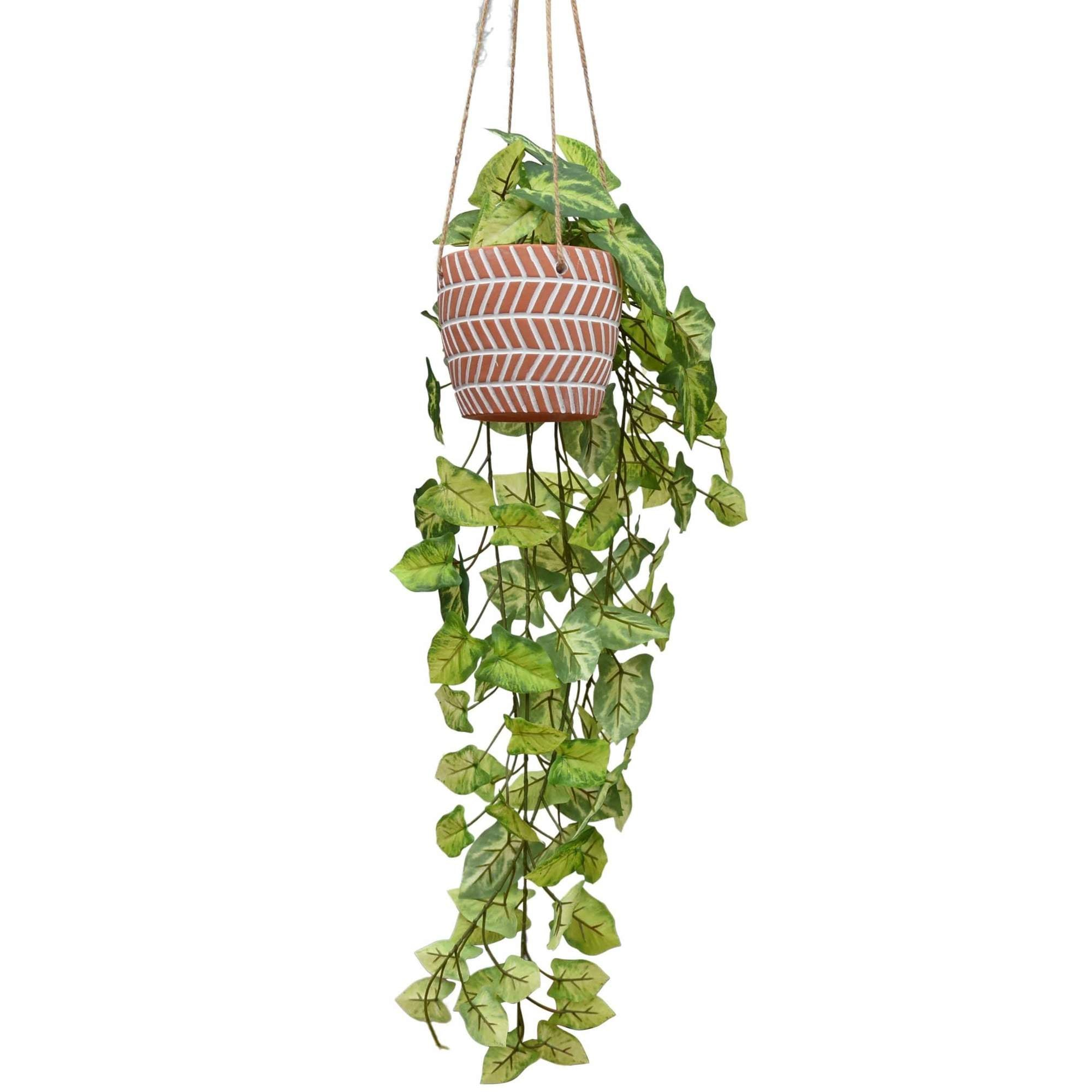 Trailing Foliage in Hanging Terracotta Ceramic Pot