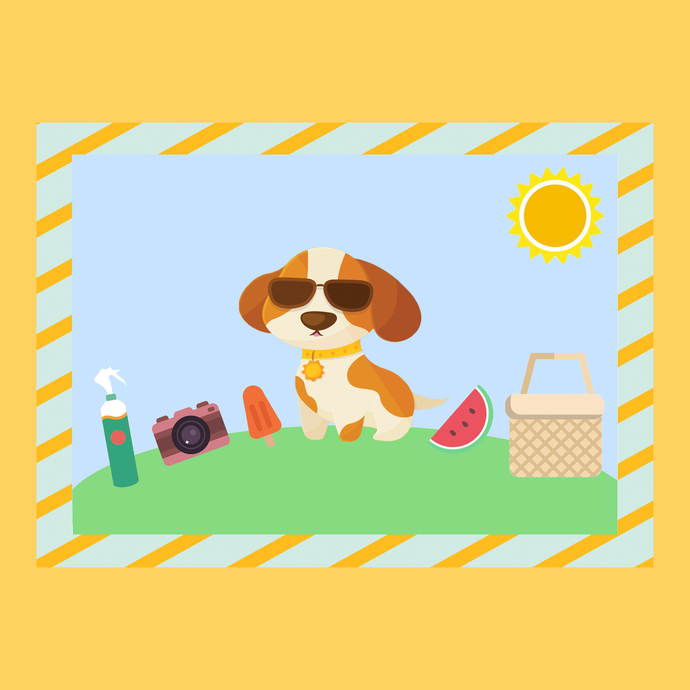 5 Pet-Friendly Summer Activities For You and Your Pets