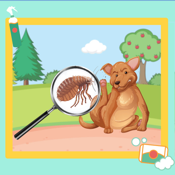 Keep Your Fur Babies Safe from Fleas and Ticks