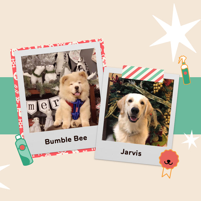 Celebrate the PAW-lidays with Your Fur Babies Safely
