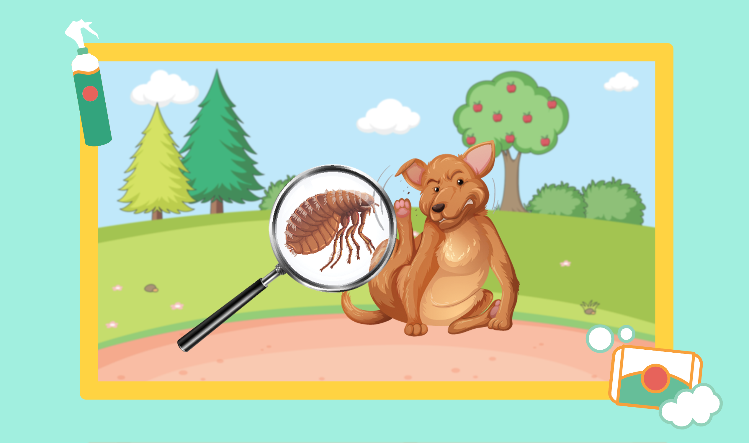 how to get rid of ticks and fleas