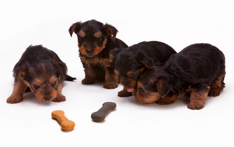 Feeding Guide for First Time Dog Owners