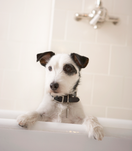 Choosing the right shampoo for pets