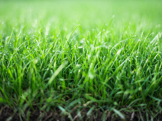 Tips for Overseeding a Lawn