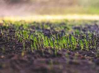 Tips for starting a new lawn from seed