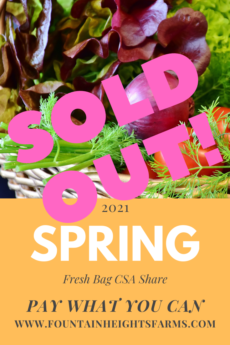 Advertisement for 2021 Spring Fresh Bag CSA with picture of spring lettuce, onions, tomatoes, and fennel in a basket. Text says SOLD OUT 2021 Spring Fresh Bag CSA Share .