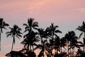 "Analogue Convergence - Sunset Print (11"" x 14"") - Aloha Beach Club"