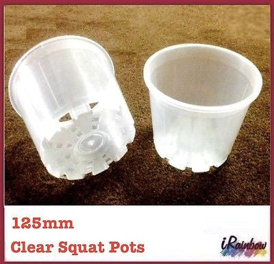 125mm Clear Round Squat Pots -  Phalaenopsis / Orchid, Propagation, Seedlings