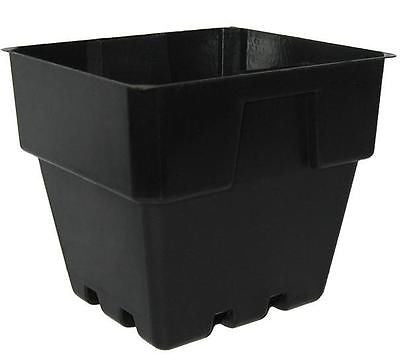 Plastic Squat Punnet Pots 100mm x 90pcs - For Plant Cutting, Seed Propagation - AusPots Permaculture