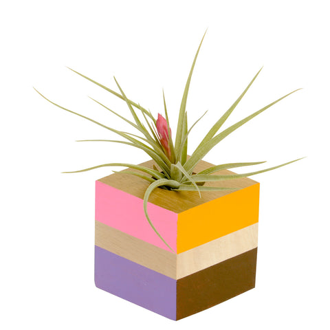 Abstract Sunburst Color Wood Cube Holder