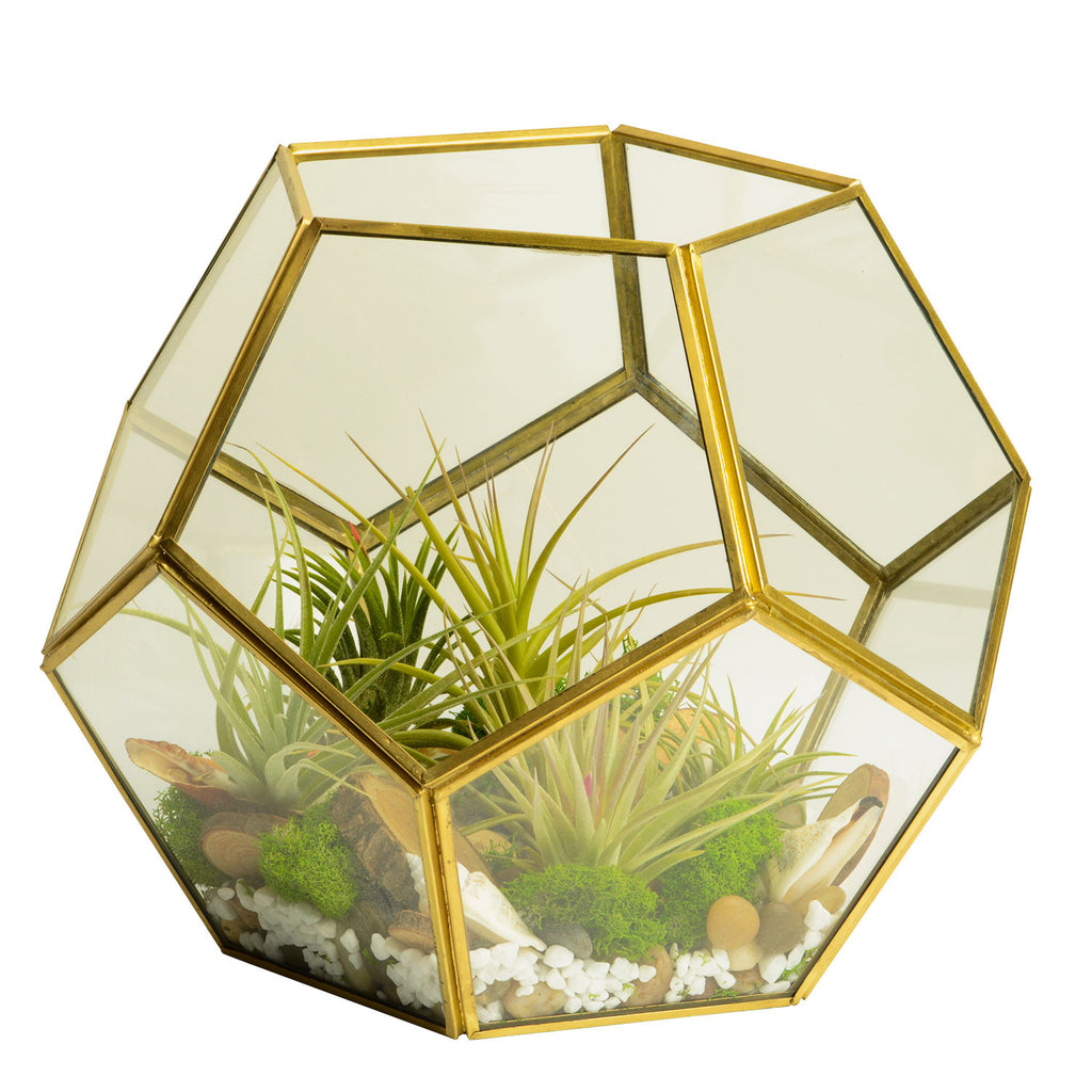 Nature Inspired Geometric Gold Glass Terrarium