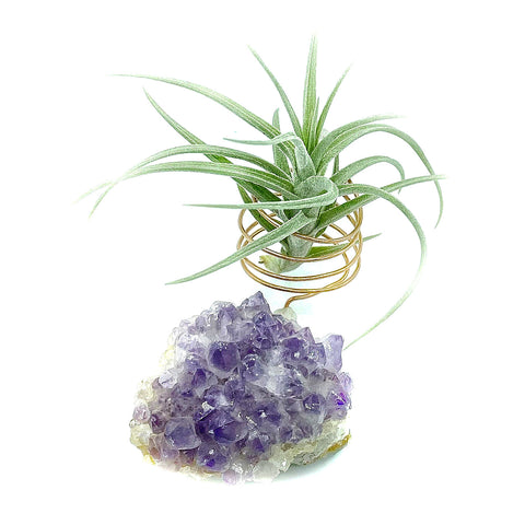 Amethyst Crystal Air Plant Holder + Plant