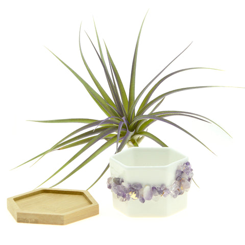 Purple Amethyst Gemstone Planter + Air Plant