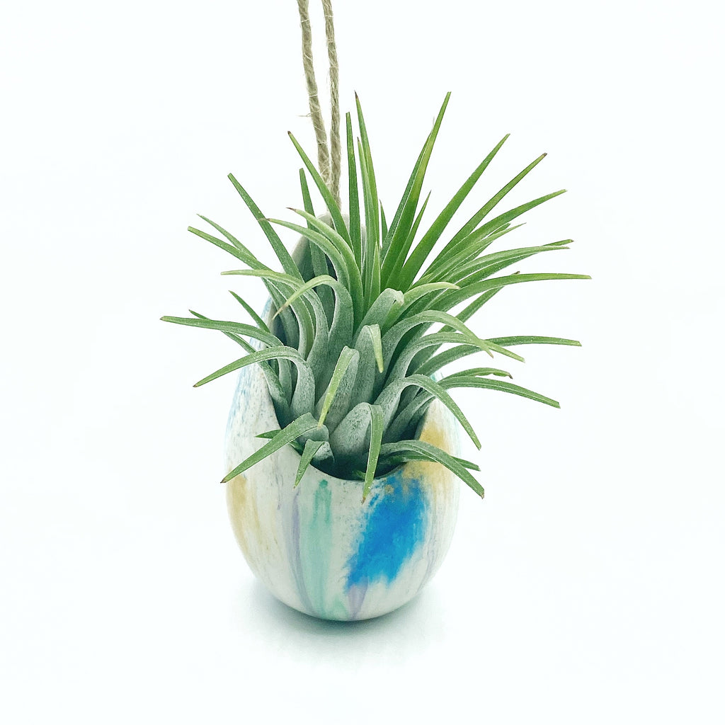 One of a Kind Air Plant Holder + Rubra