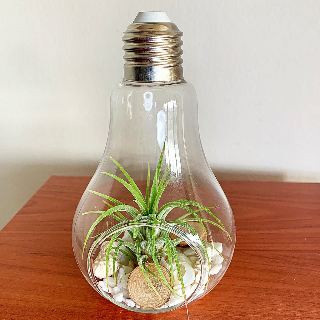 Light Bulb Terrarium Yumi Jewelry Plants