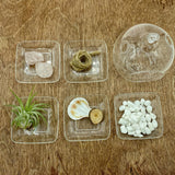 "3"" Quartz Bubble Terrarium"