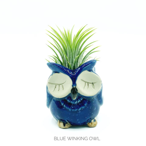 Owl Planter + Air Plant