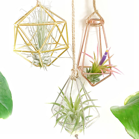 Set of 3 - Geometric Air Plant Ornament Gift Collection