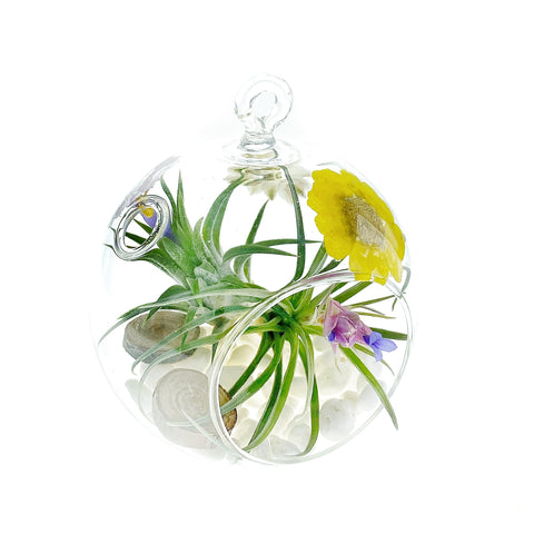 "Wild Flowers 3"" Bubble Terrarium"