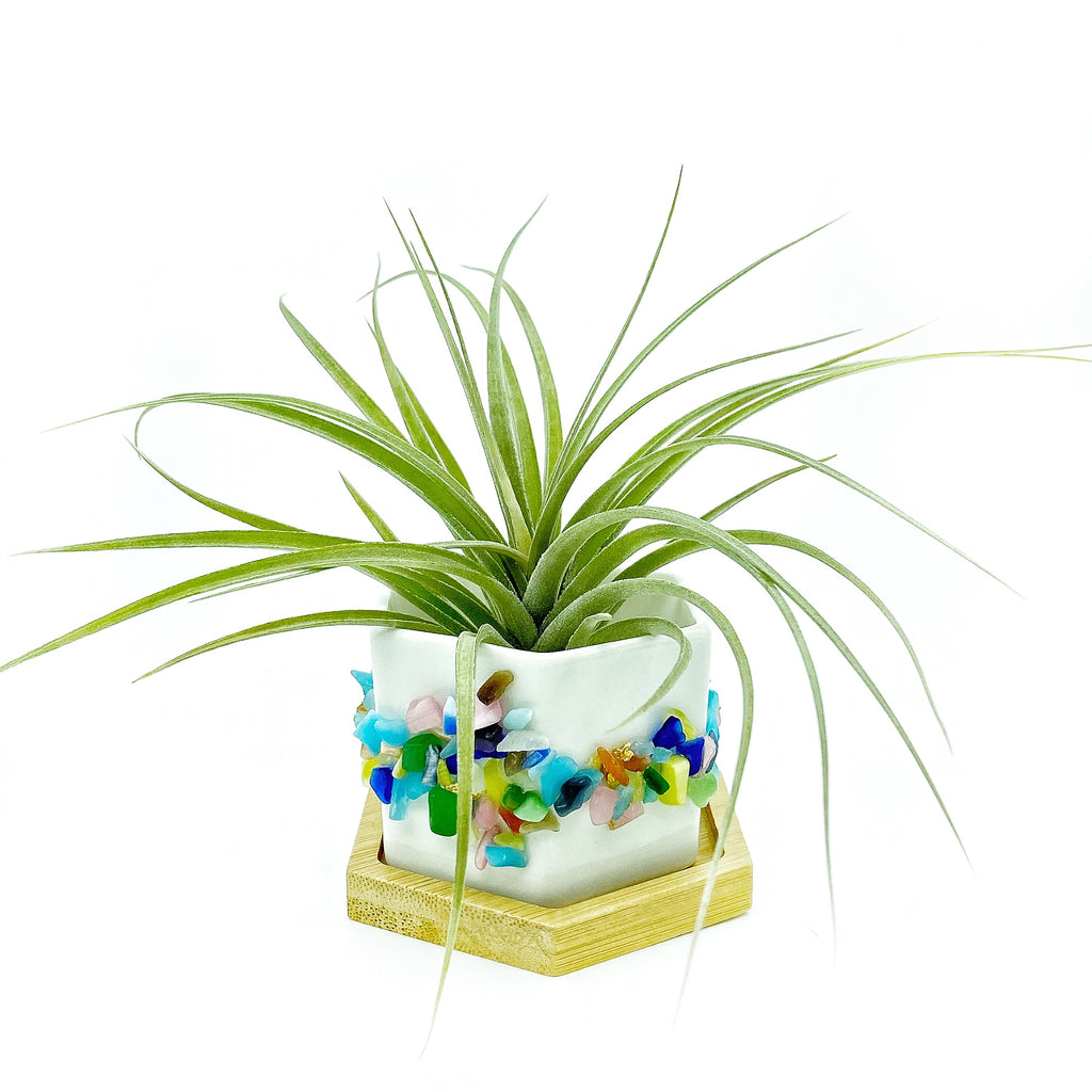 Rainbow Cats Eye Gemstone Planter + Air Plant