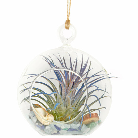 "4"" Seaside Dreams Bubble Terrarium"