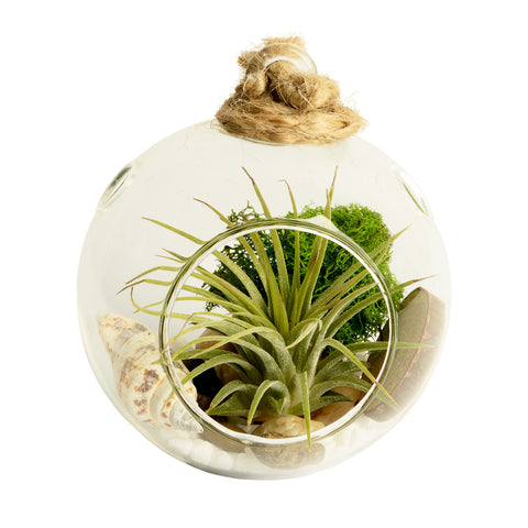 Nature Walk Bubble Terrarium