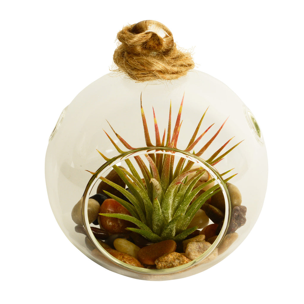 Fuego + Rocks Bubble Terrarium