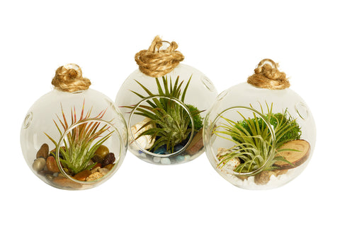 Triple Nature Bubble Terrarium Set