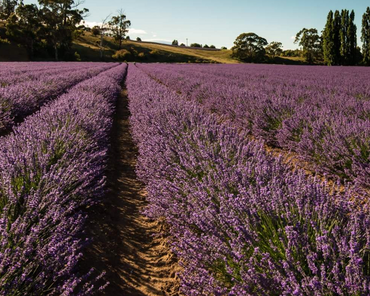 Now Smell This! - Lavender & Rosemary, Australian Botanicals