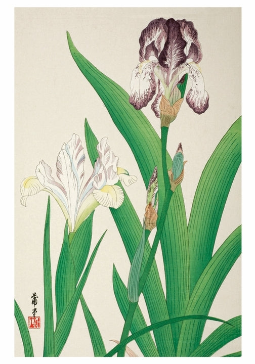 Iris Small Boxed Cards by Nishimura Hodo