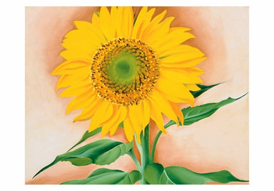 A Sunflower from Maggie Small Boxed Cards by Georgia O'Keeffe