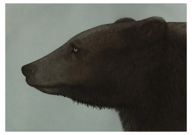 Van Hoesen's expressive style is evident in her black bear images where she captures the personality of the individual.
