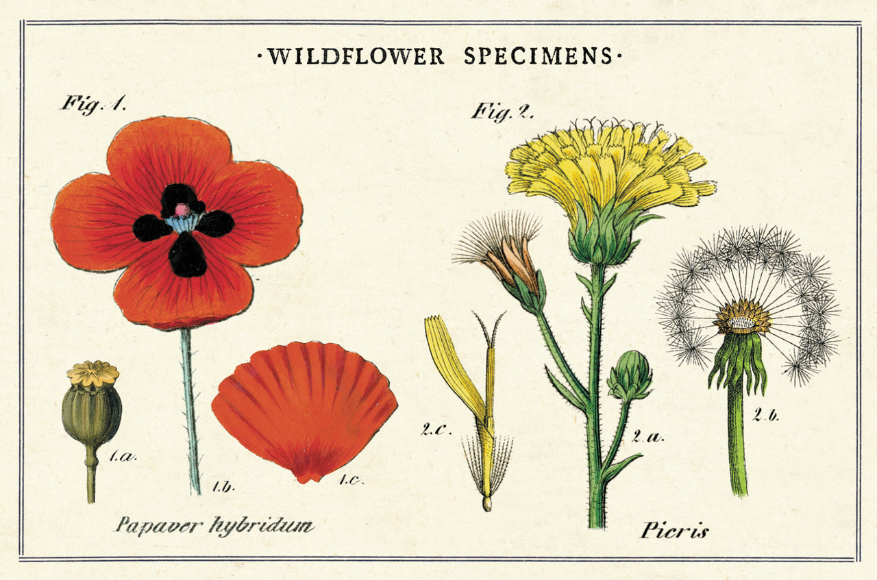 Wildflowers Vintage Postcards by Cavallini & Co.