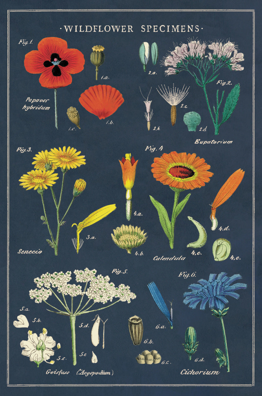 Wildflowers are sure to become one of Cavallini's favorite design themes.