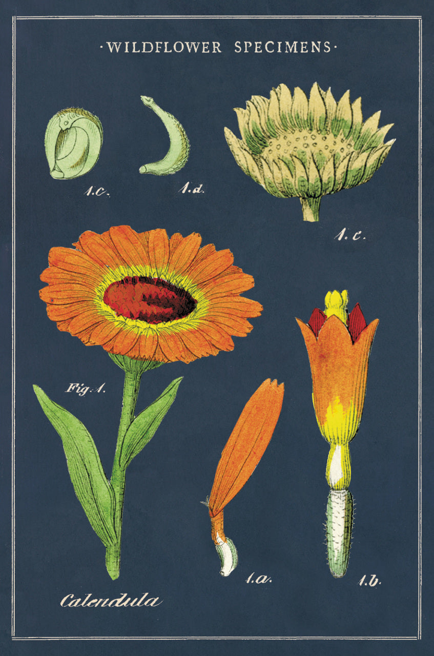 Wildflowers Vintage Postcard set features reproductions of vintage botanical images.