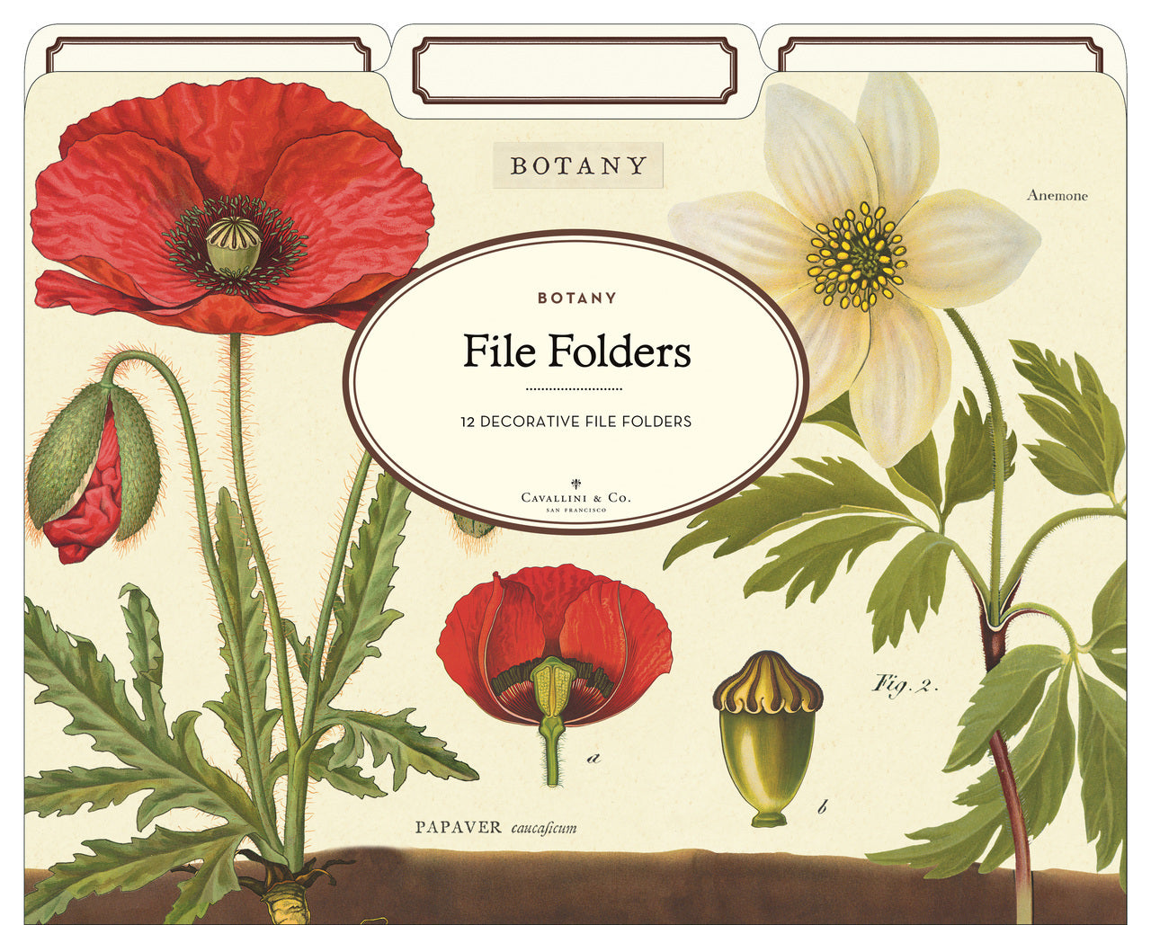 Botanical File Folder set by Cavallini & Co. features vintage natural history images form the Cavallini archives.